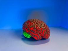Make Work Fun Again With Neuroscience Tips